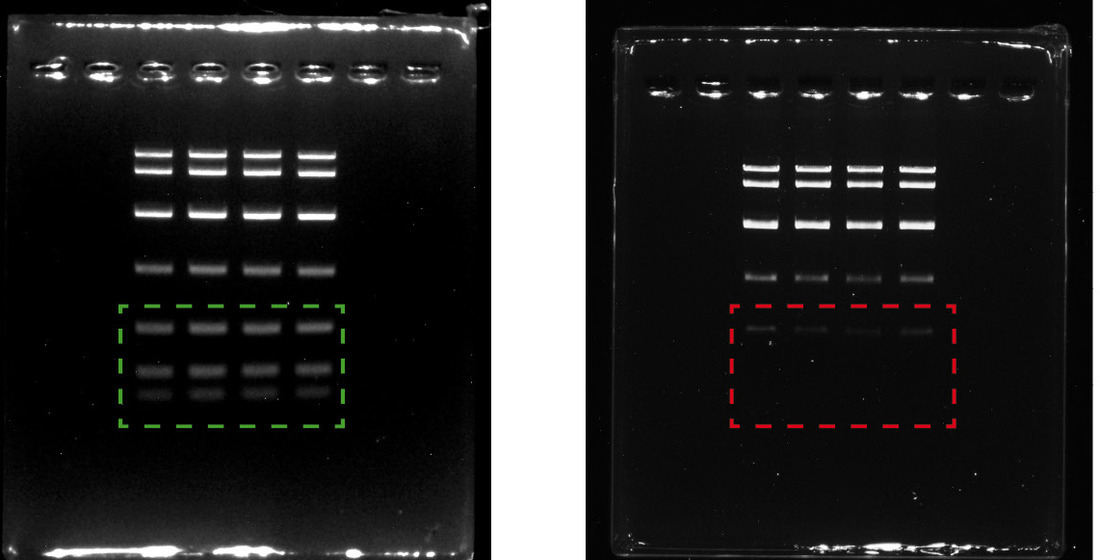 Separation efficiency of different agaroses for the detection of small DNA fragments